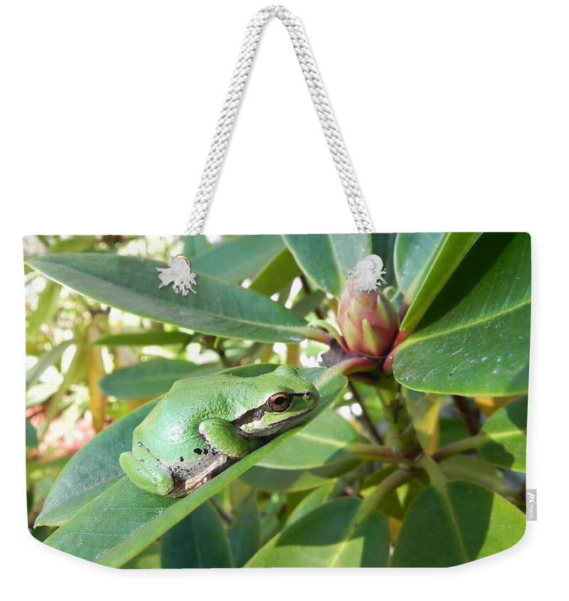 Chorus Frog Weekender Tote Bag featuring the photograph Pacific Chorus Frog On A Rhodo by Cheryl Hoyle