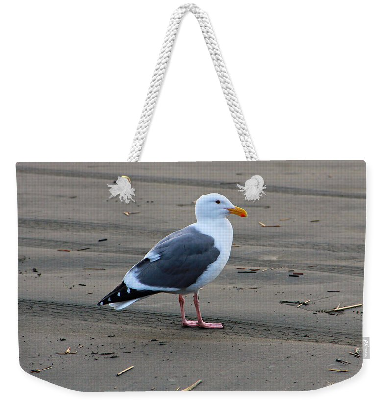 Ocean Weekender Tote Bag featuring the photograph Pacific Seagull by Jeanette C Landstrom
