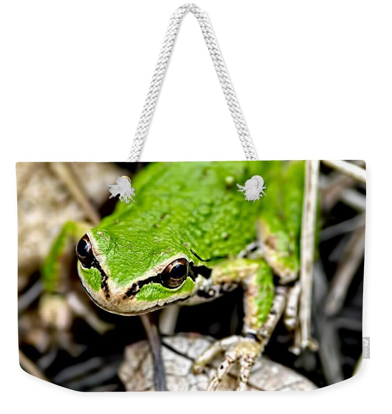 Pacific Tree Frog Weekender Tote Bag featuring the photograph Pacific Tree Frog 2a by Sharon Talson