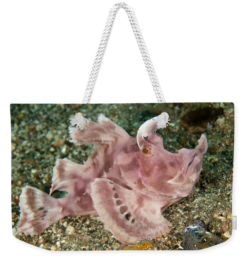 Flpa Weekender Tote Bag featuring the photograph Paddle-flap Scorpionfish Lembeh Straits by Colin Marshall