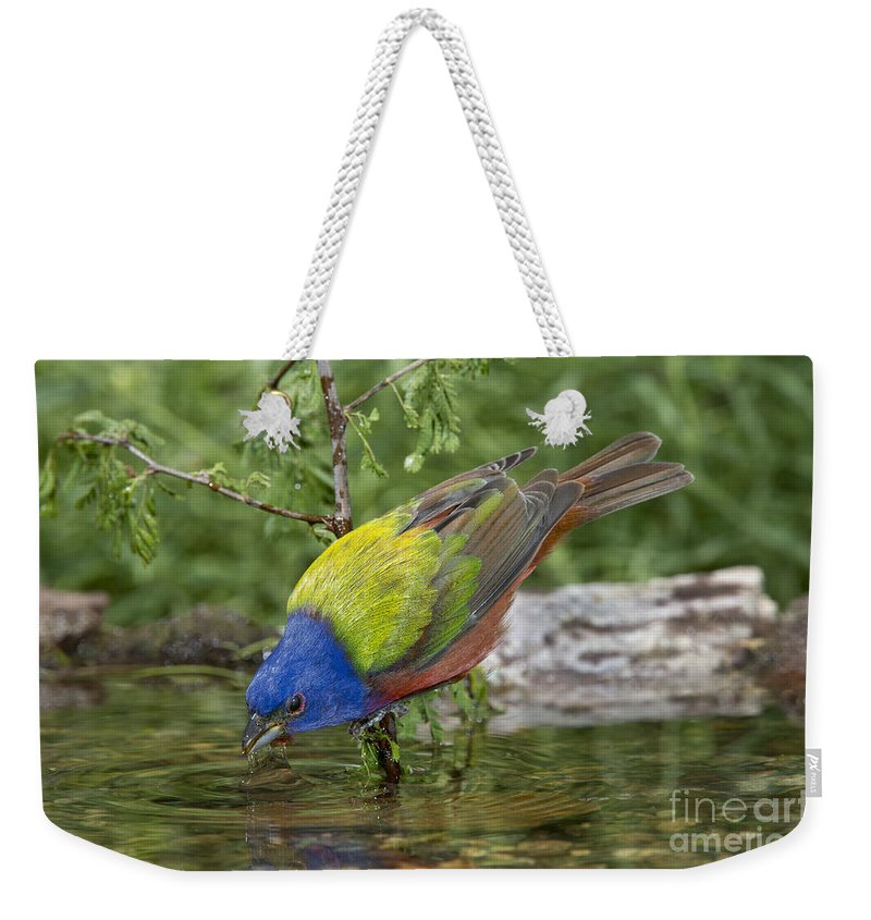 Painted Bunting Weekender Tote Bag featuring the photograph Painted Bunting by Anthony Mercieca