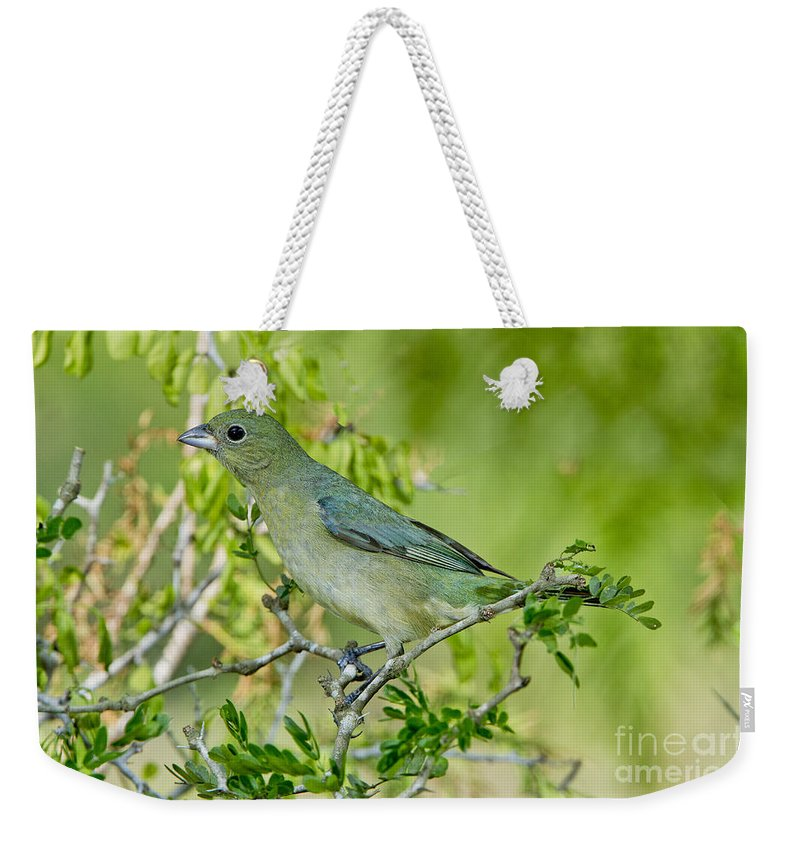 Painted Bunting Weekender Tote Bag featuring the photograph Painted Bunting Hen by Anthony Mercieca