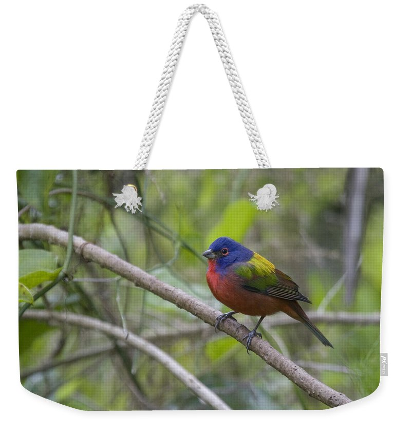 Painted Bunting Weekender Tote Bag featuring the photograph Painted Bunting by Sandy Swanson