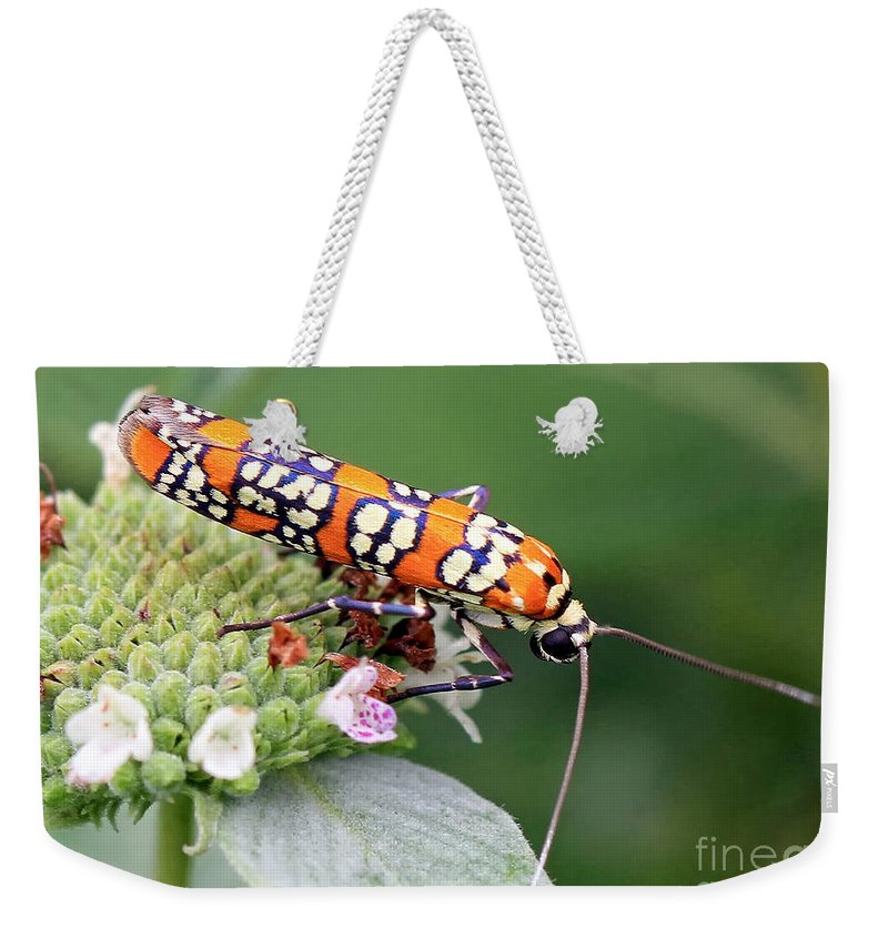 Bugs Weekender Tote Bag featuring the photograph Painted Lady by Geoff Crego