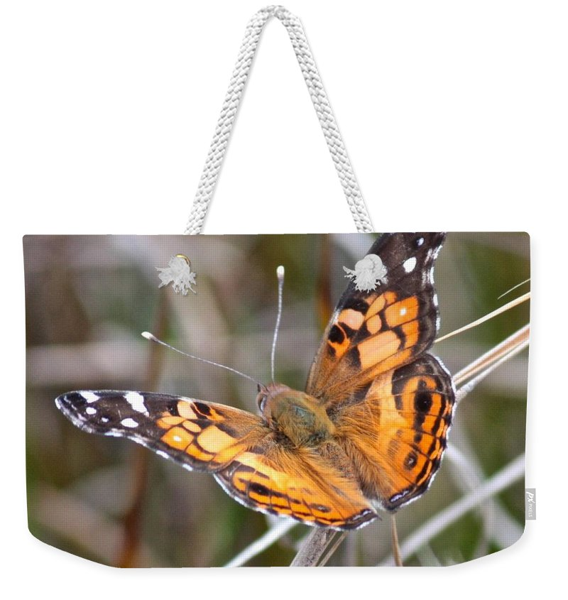Butterfly Weekender Tote Bag featuring the photograph Painted Lady Square by Carol Groenen
