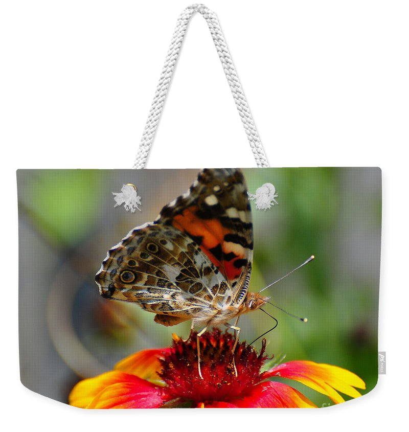 Butterfly Weekender Tote Bag featuring the photograph Painted Lady by Todd Hostetter