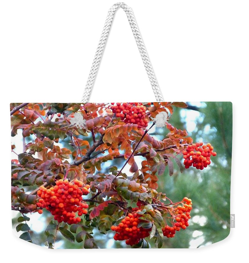 Painted Mountain Ash Berries Weekender Tote Bag featuring the digital art Painted Mountain Ash Berries by Will Borden