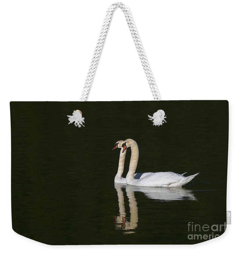 Mute Swans Weekender Tote Bag featuring the photograph Pair Of Mute Swans by Sharon Talson