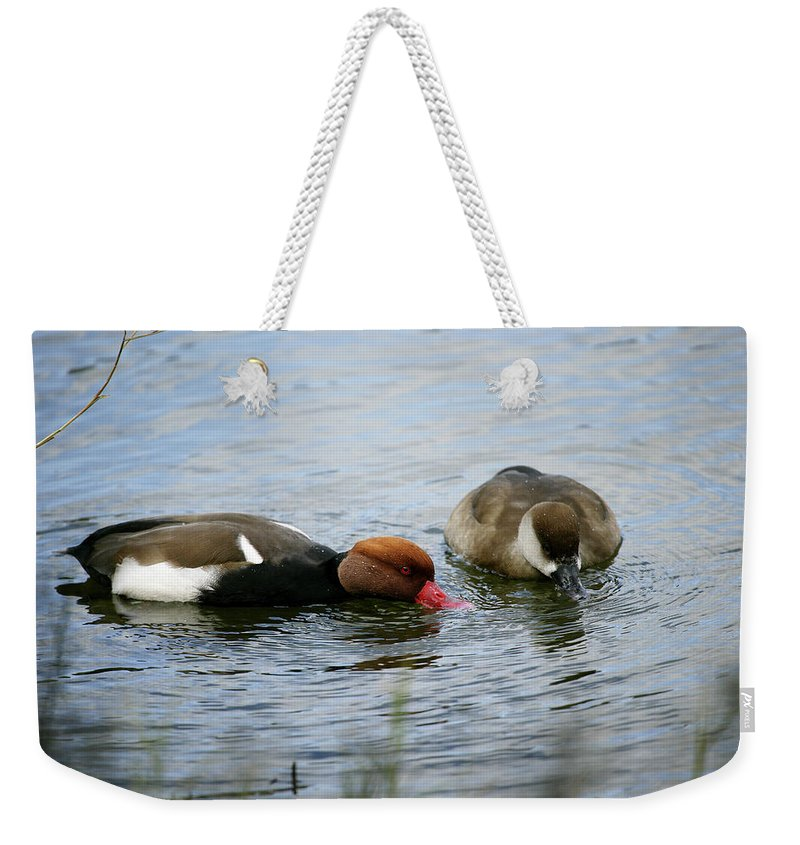Red-crested Pochards Weekender Tote Bag featuring the photograph Pair Of Red-crested Pochards Netta by David Santiago Garcia