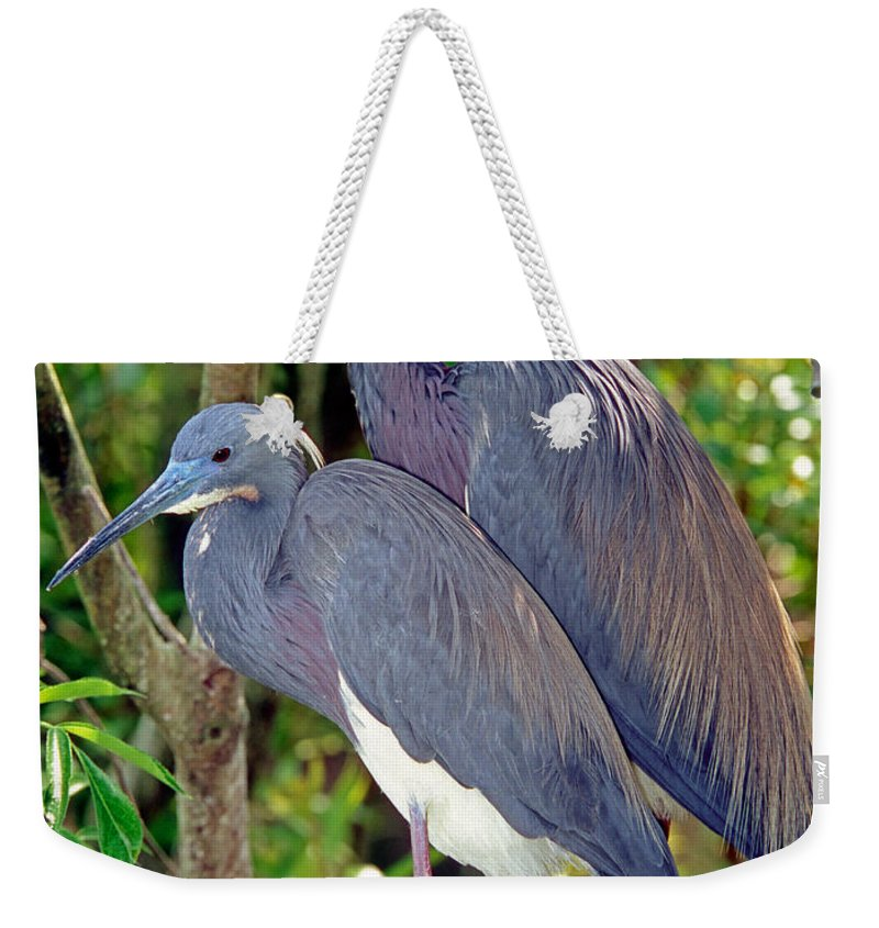 Animal Weekender Tote Bag featuring the photograph Pair Of Tricolored Heron At Nest by Millard H. Sharp