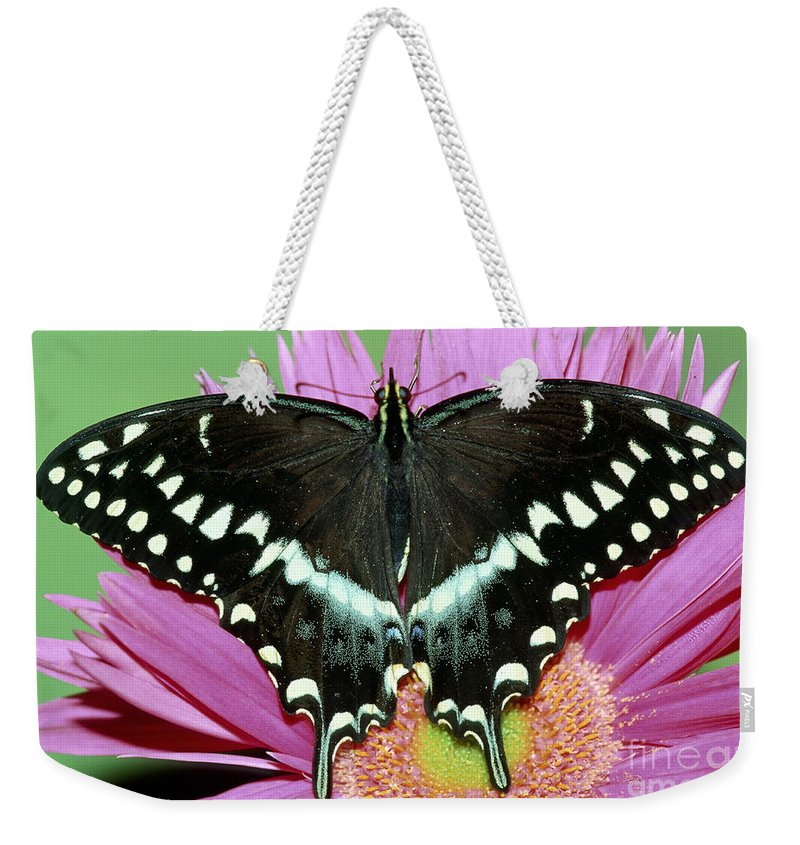 Animal Weekender Tote Bag featuring the photograph Palamedes Swallowtail Papilio Palamedes by Millard H. Sharp