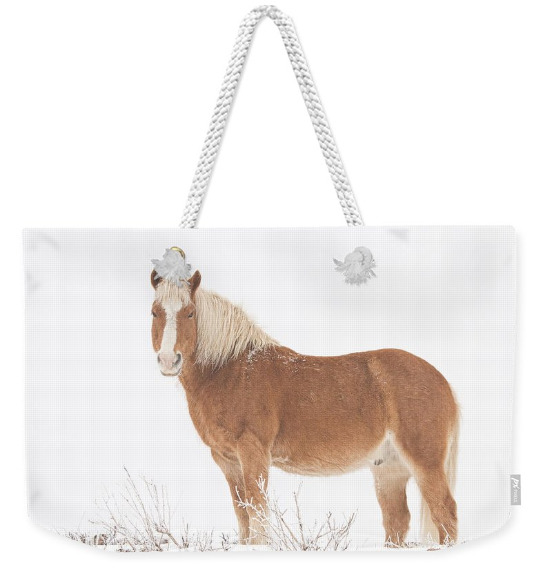 Palomino Weekender Tote Bag featuring the photograph Palomino Horse In The Snow by James BO Insogna