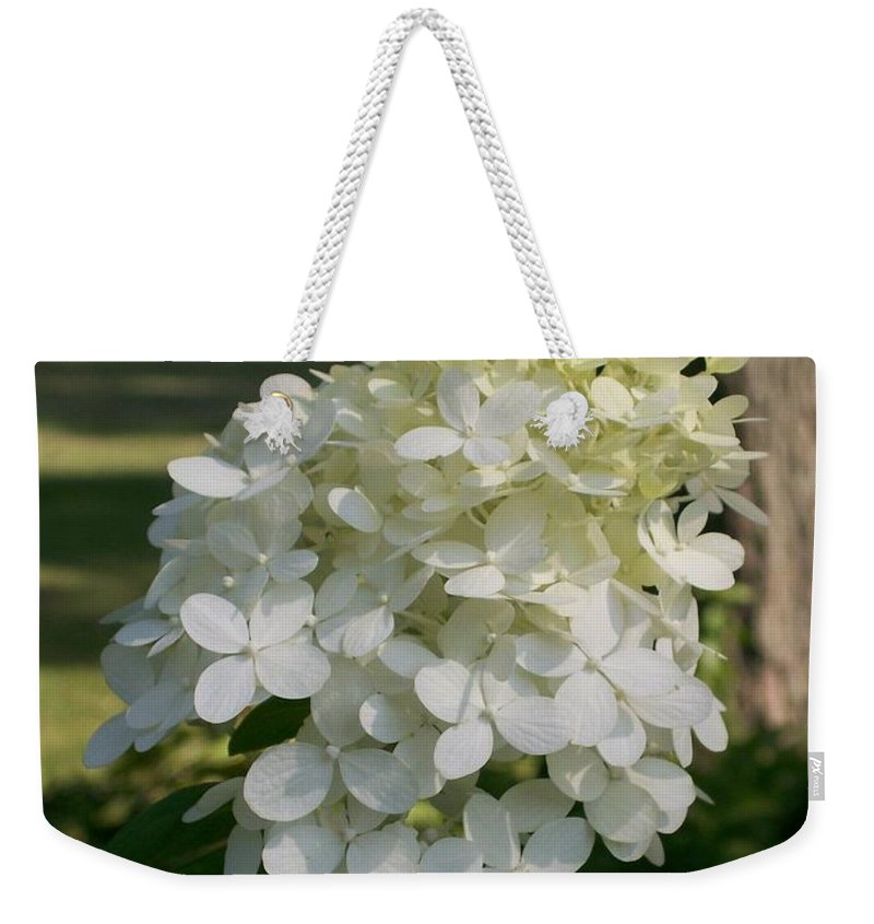 Hydrangea Weekender Tote Bag featuring the photograph Panicled Hydrangea by Laurie Eve Loftin