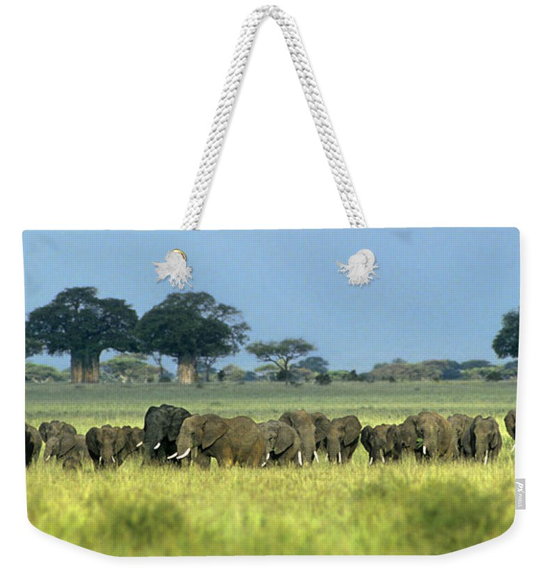 Africa Weekender Tote Bag featuring the photograph Panorama African Elephant Herd Endangered Species Tanzania by Dave Welling