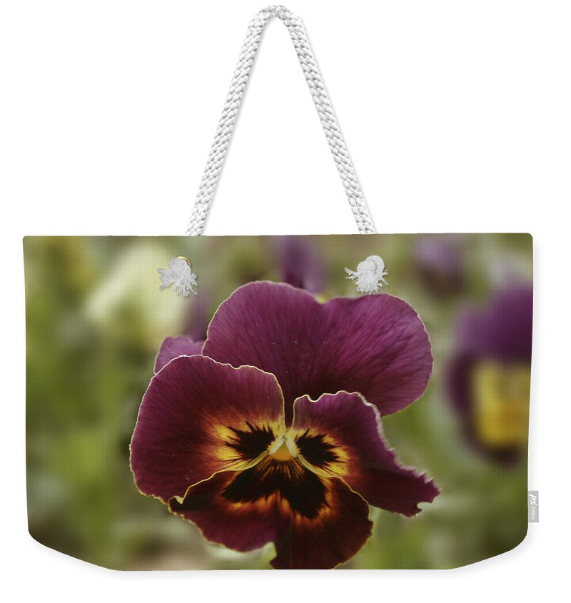 Pansy Flower Weekender Tote Bag featuring the painting Pansy Beauty Photograph by Georgeta Blanaru