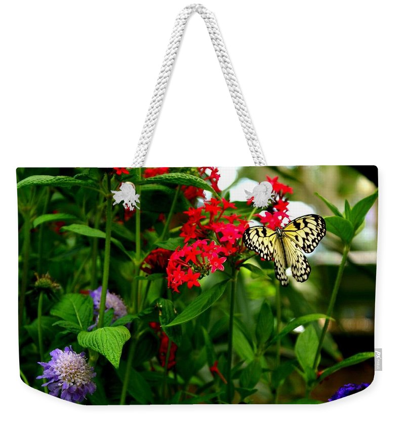 Paper Kite Butterfly Weekender Tote Bag featuring the photograph Paper Kite Butterfly II by Jacqueline Russell