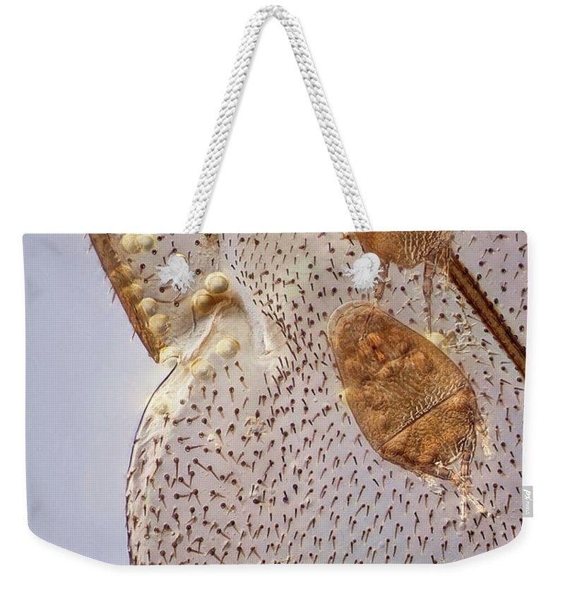 Image Digitally Manipullated Weekender Tote Bag featuring the photograph Parasitic Mites 501 by Javier Torrent - Vwpics