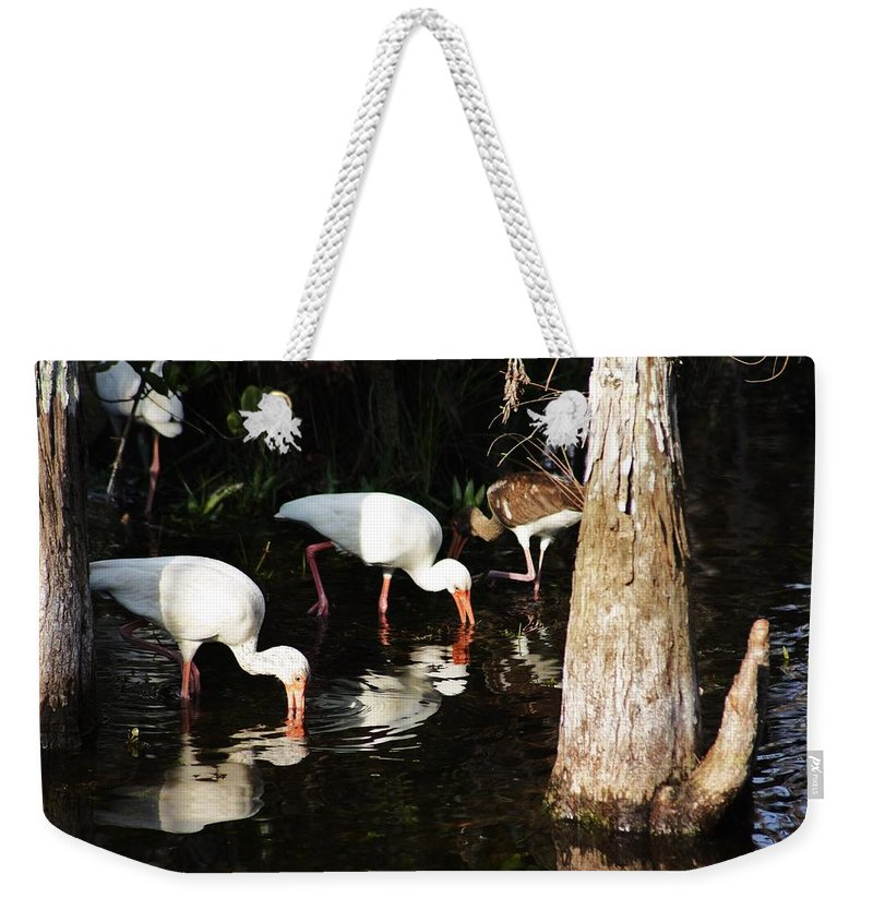 Ibis Weekender Tote Bag featuring the photograph Parents And Child by Chuck Hicks