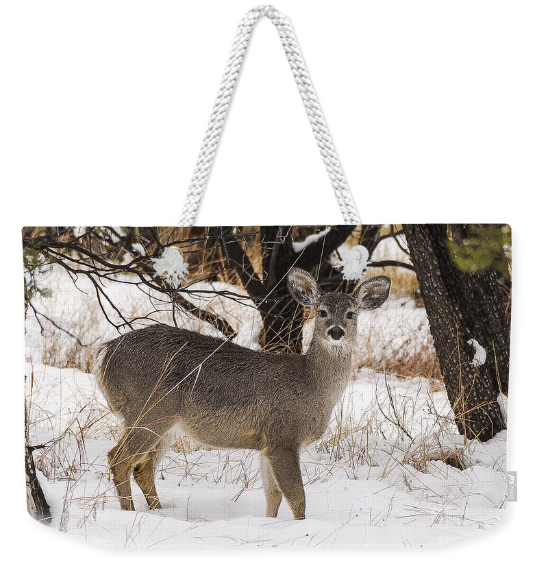 Snow Weekender Tote Bag featuring the photograph Parker Canyon 10 by Larry White