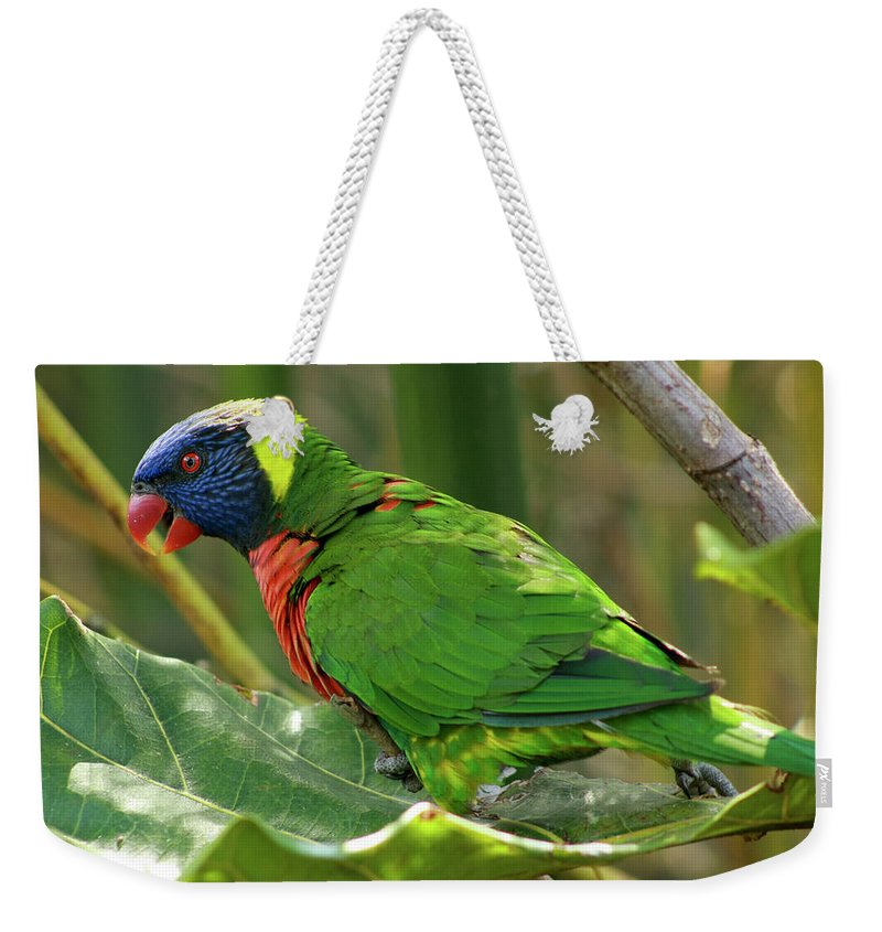 Animal Weekender Tote Bag featuring the photograph Parrot by � Marcela Montano - Vwpics