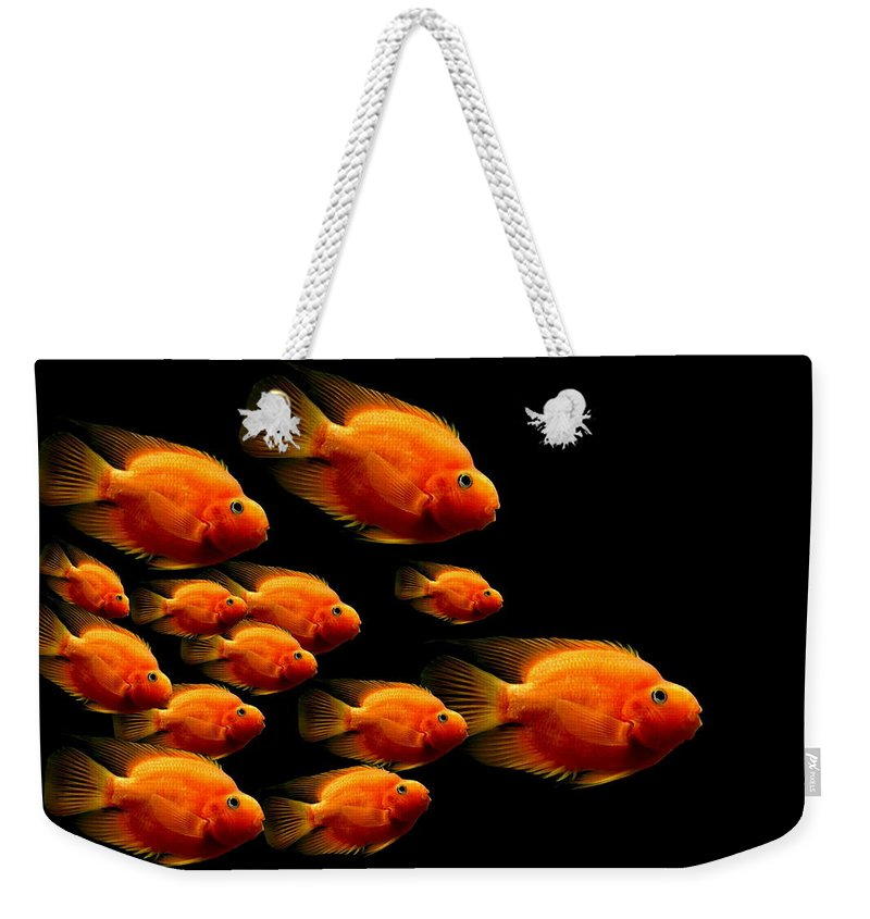 Fish Weekender Tote Bag featuring the photograph Parrot Fish by Heike Hultsch