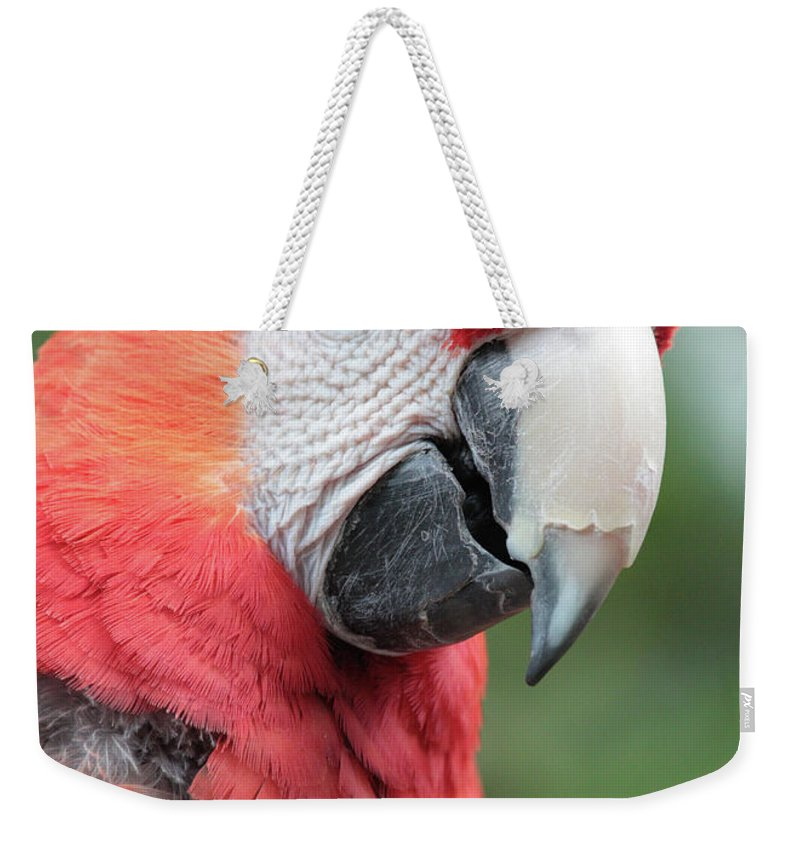 Parrot Weekender Tote Bag featuring the photograph Parrot Profile by Carol Groenen