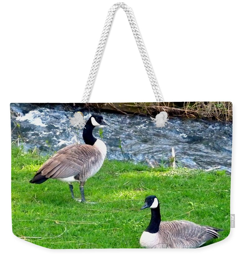 Partners For Life Weekender Tote Bag featuring the photograph Partners For Life by Will Borden