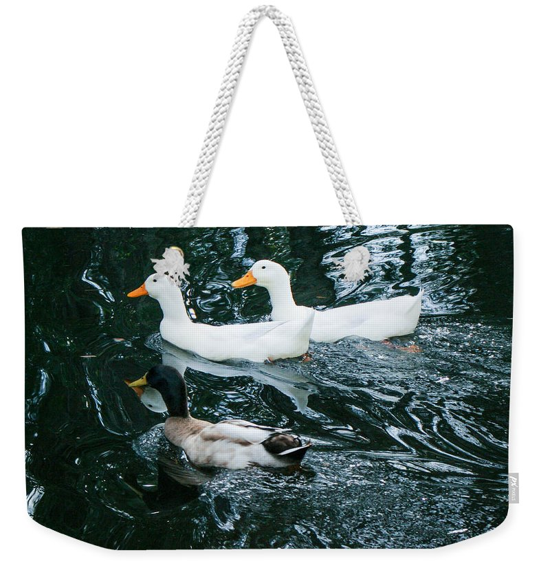 Three Ducks Weekender Tote Bag featuring the photograph Party Of Three by Mechala Matthews