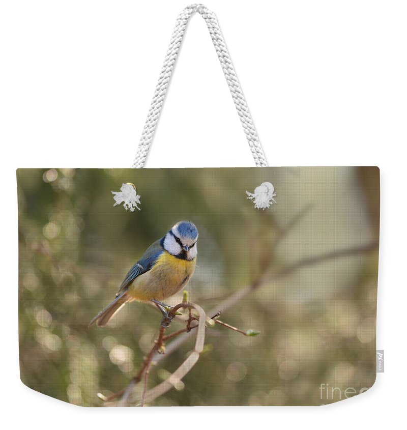 Blaminsky Weekender Tote Bag featuring the photograph Parus Sitting On A Thin Branch by Jaroslaw Blaminsky