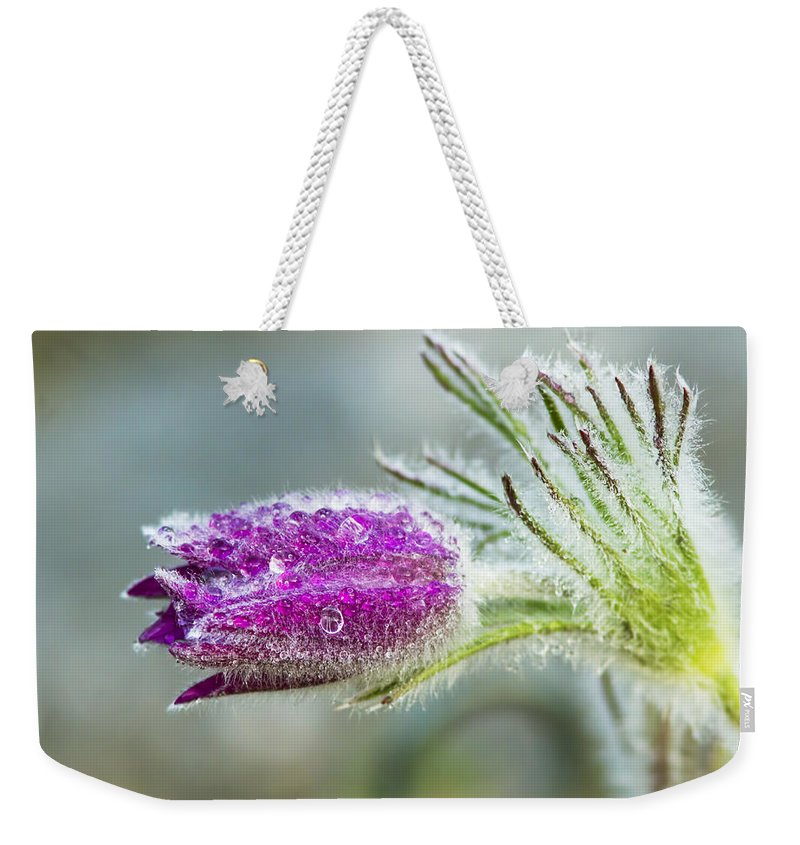 Pasque Weekender Tote Bag featuring the photograph Pasque Flower by Mircea Costina Photography