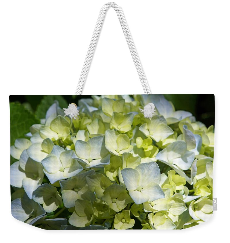 Blue Weekender Tote Bag featuring the photograph Pastel Blue White Green Hydrangea Flowers by Patti Baslee