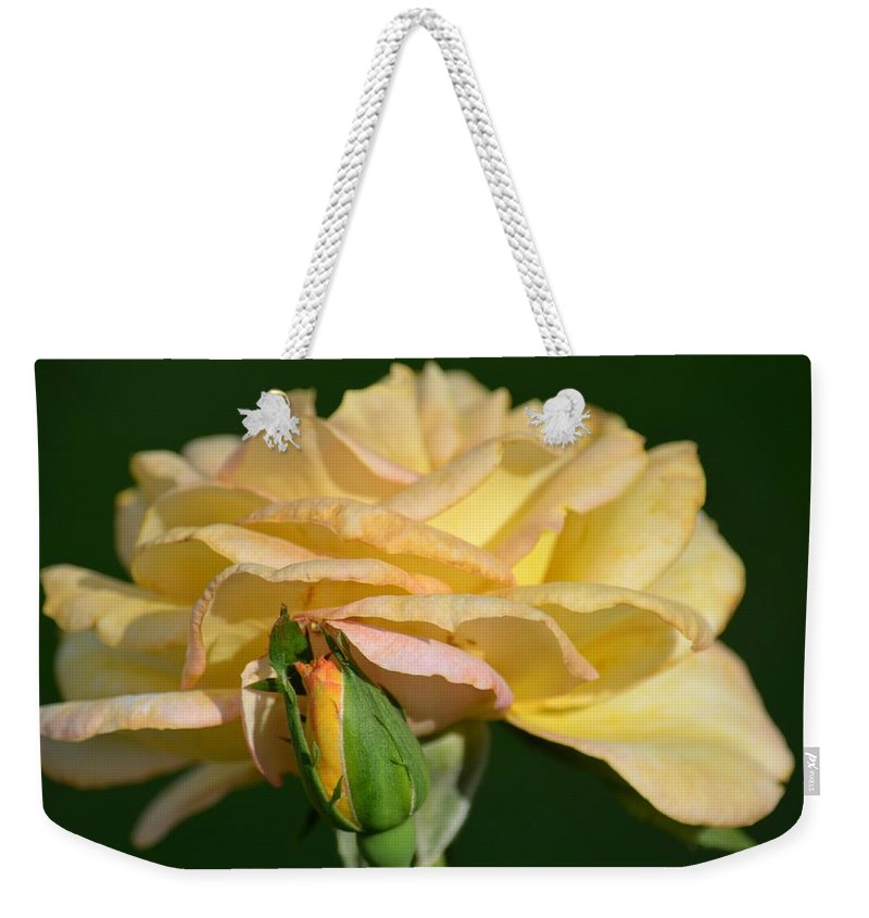 Pastel Rose Ruffles Weekender Tote Bag featuring the photograph Pastel Rose Ruffles by Maria Urso