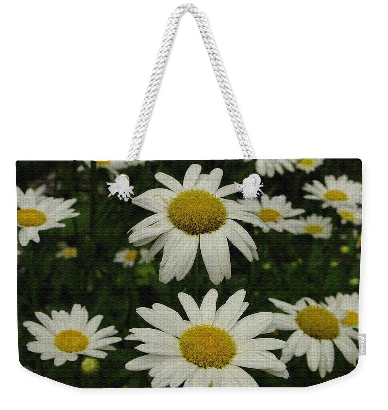 Daisy Weekender Tote Bag featuring the photograph Patch Of Daisies by James C Thomas