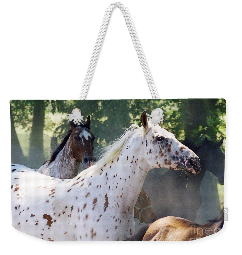Appaloosa Weekender Tote Bag featuring the photograph Patches And Dots by Angel Ciesniarska