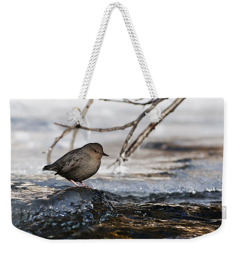 American Dipper Weekender Tote Bag featuring the photograph Patience by Ted Raynor