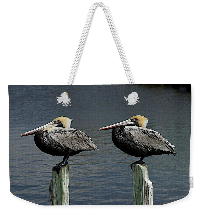 Birds Weekender Tote Bag featuring the photograph Patient Pair by Joseph Yarbrough