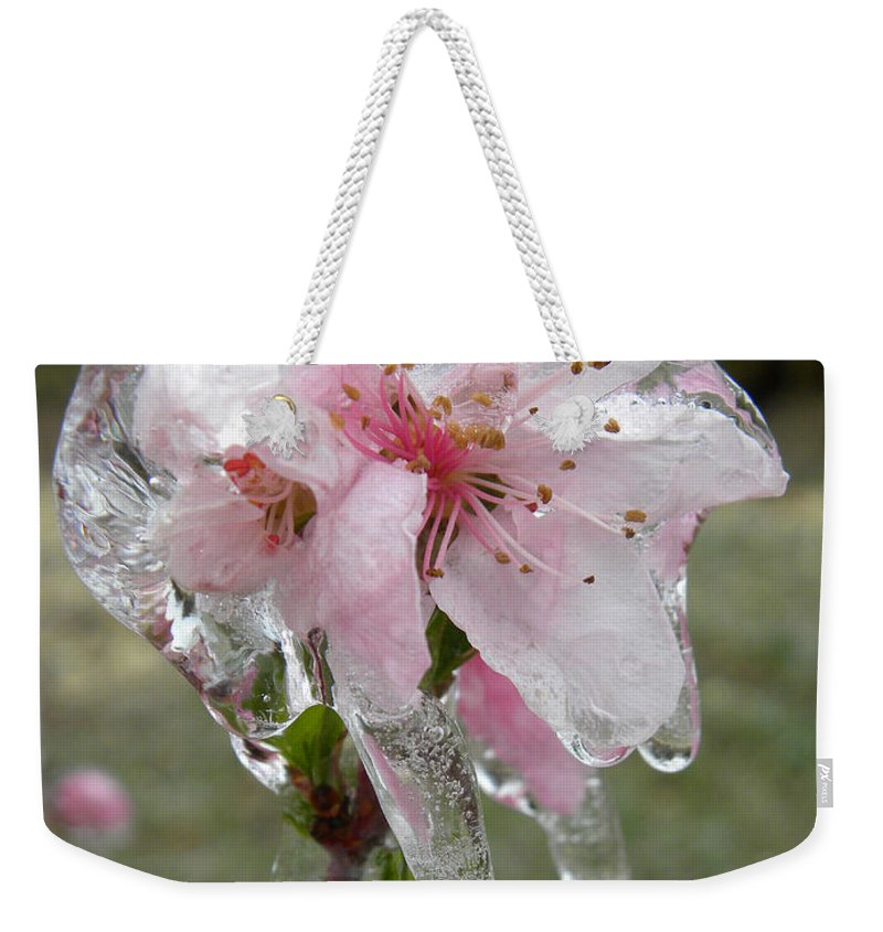 Peach Weekender Tote Bag featuring the photograph Peach Blossom In Ice by Sheri Lauren