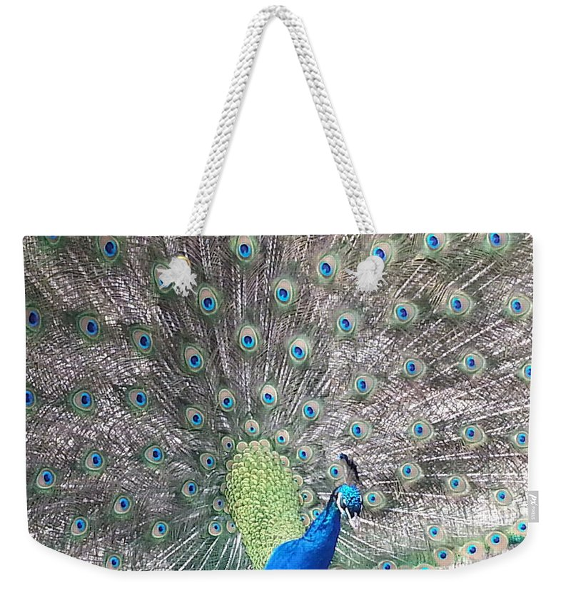 Peacock Weekender Tote Bag featuring the photograph Peacock Bow by Caryl J Bohn