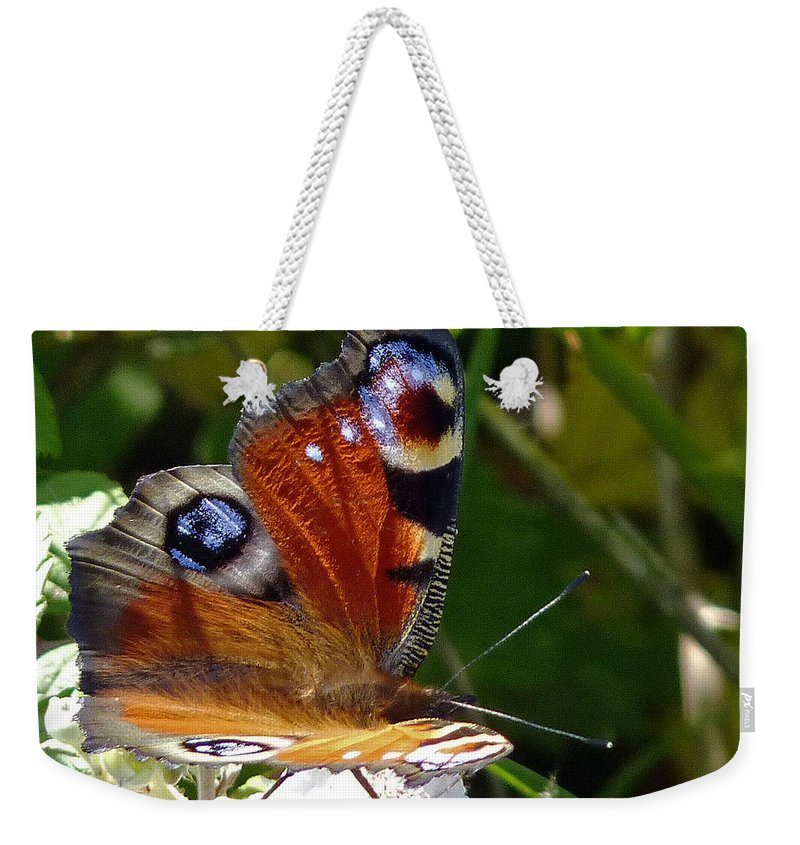Peacock Butterfly Weekender Tote Bag featuring the photograph Peacock Butterfly by Tony Murtagh