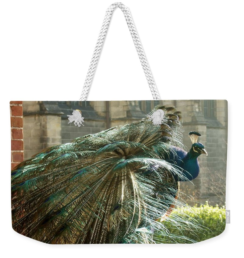 Weekender Tote Bag featuring the photograph Peacock Flurry by Katerina Naumenko