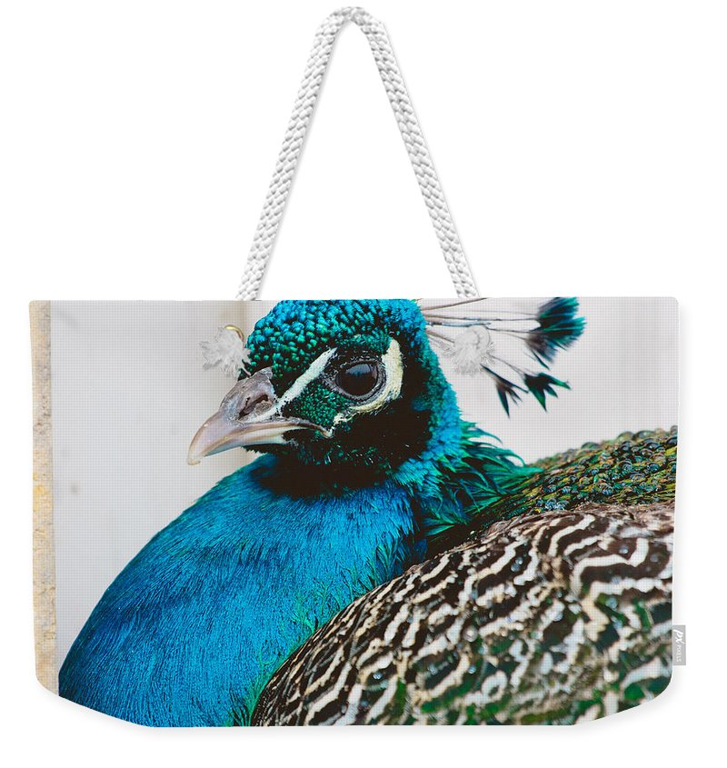 Bird Weekender Tote Bag featuring the photograph Peacock Square by Pati Photography