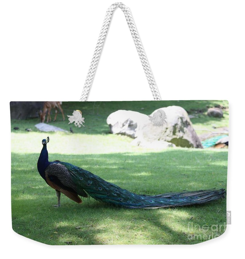 Peacock Strutting His Stuff Weekender Tote Bag featuring the photograph Peacock Strutting His Stuff by John Telfer