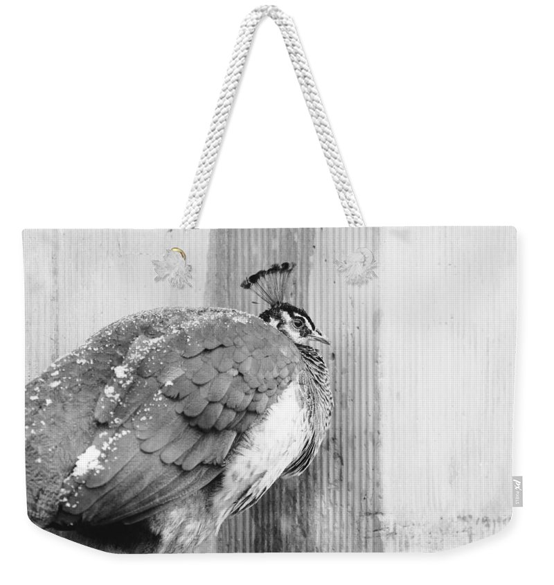 Black Weekender Tote Bag featuring the photograph Peafowl by Pati Photography