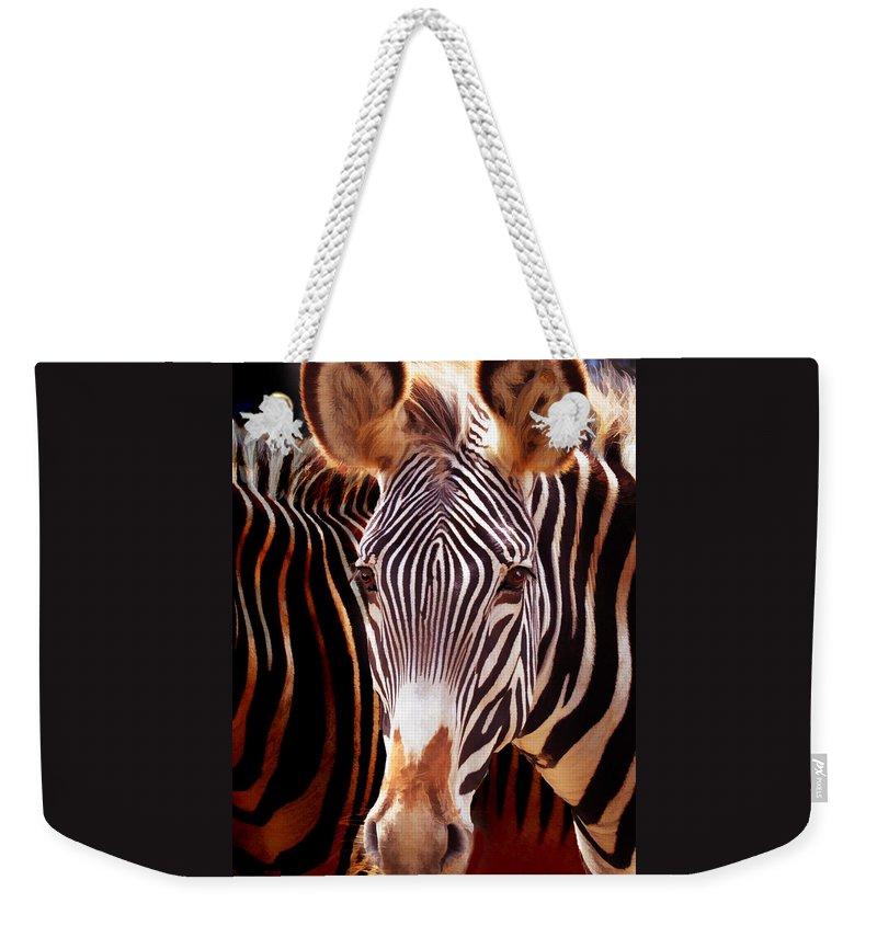 Zebras Weekender Tote Bag featuring the photograph Peek A Boo by Melinda Hughes-Berland