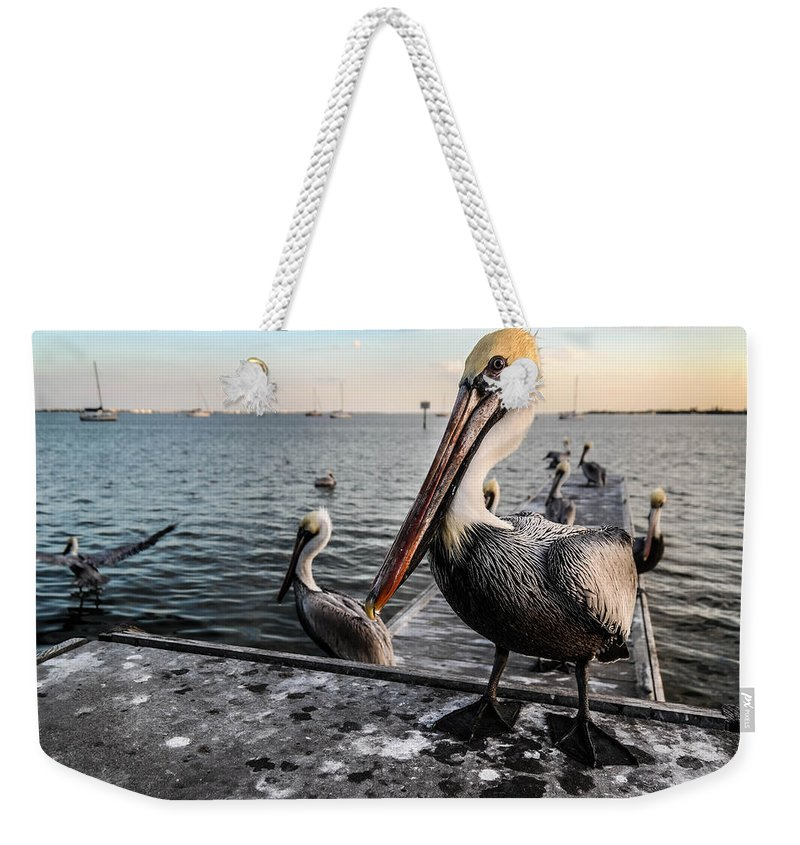 Pelican Weekender Tote Bag featuring the photograph Pelican At The Pier by Tammy Lee Bradley