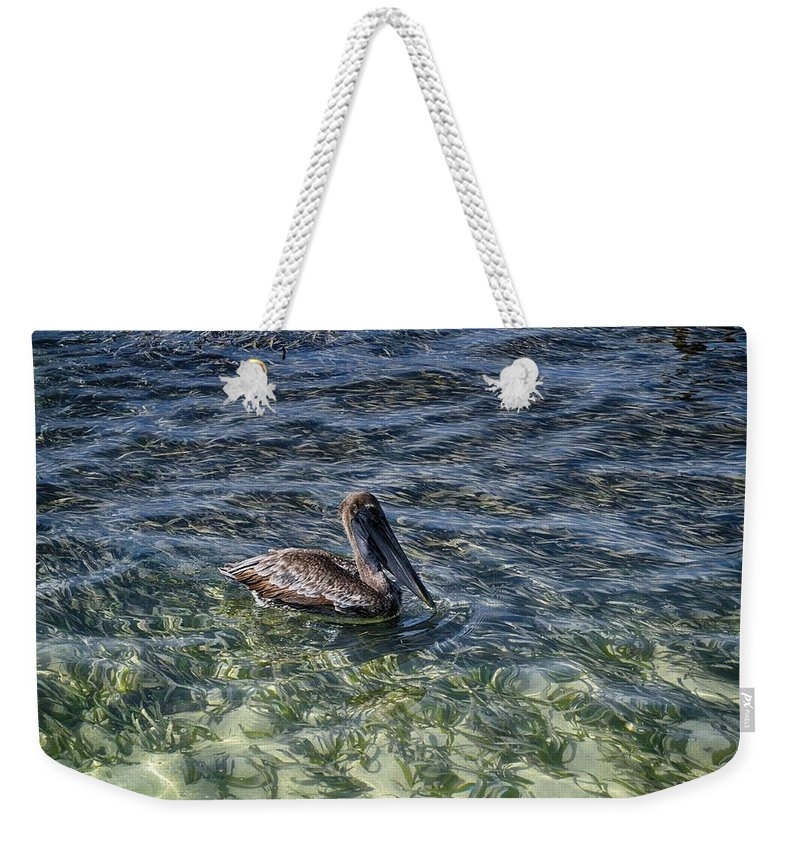Pelican Photograph Weekender Tote Bag featuring the photograph Pelican Floater by Kristina Deane