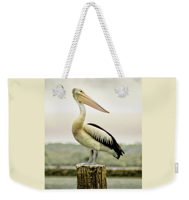 Animlas Weekender Tote Bag featuring the photograph Pelican Poise by Holly Kempe