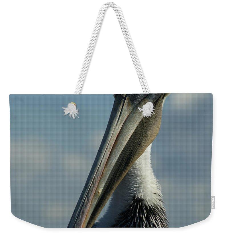 Brown Pelican Weekender Tote Bag featuring the photograph Pelican Profile by Ernie Echols