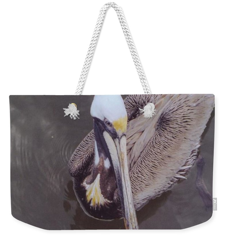 Matlacha Weekender Tote Bag featuring the photograph Pelican by Robert Floyd