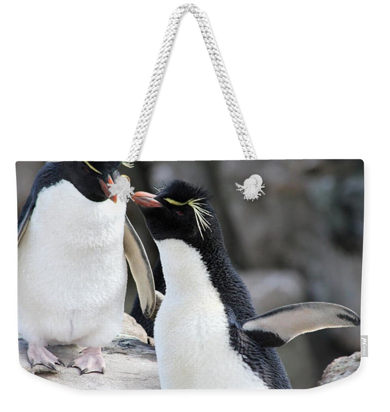 Baby Weekender Tote Bag featuring the photograph Penguin New Baby Card by Ginny Barklow